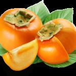 Sadnice voca japanska jabuka Kaki tipo