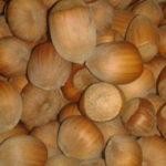 Sadnice lesnika - Istarski okrugli