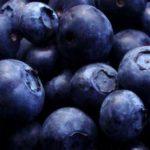 Sadnice borovnice Early blue