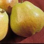 Vocne sadnice kruske Kiferova citronka
