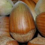 Vocne sadnice lesnika - Ludolf