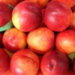 Sadnice voca nektarine - Kaldezi 2000