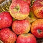 Stare sorte jabuke - Krstovaca