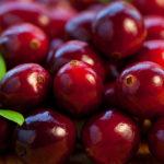 Sadnice voca - brusnica Red Howes